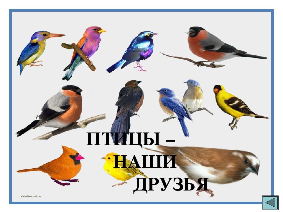 картинка птицы наши друзья спутниковой схематической картах