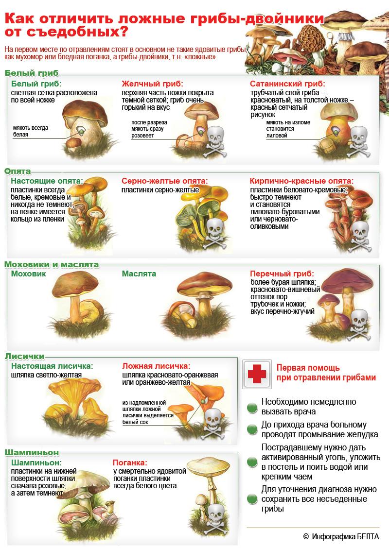 съедобные грибы в липецкой области фото и описание