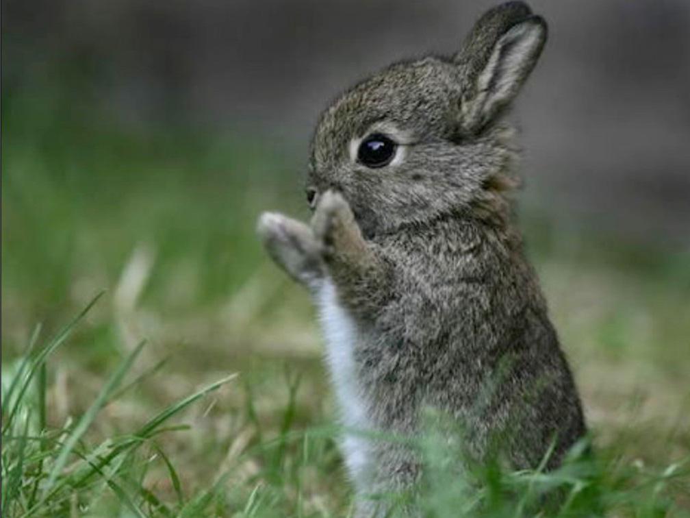 атмосфера картинки маленькие заяц сокровища лишь