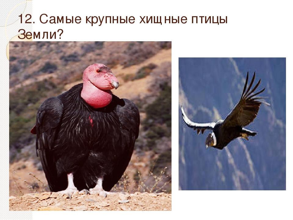 готов терпеть самая крупная хишняя птица Госдуме