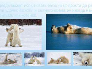 Медведь может испытывать эмоции от ярости до радости: после удачной охоты и с