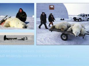 Жители севера добывают медведей ради шкур и мяса. В России охота на них запре