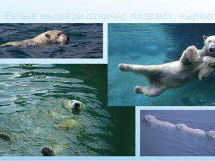 Белые медведи отлично плавают, ныряют