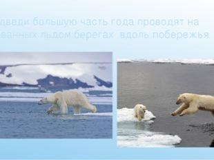 Медведи большую часть года проводят на скованных льдом берегах вдоль побережья