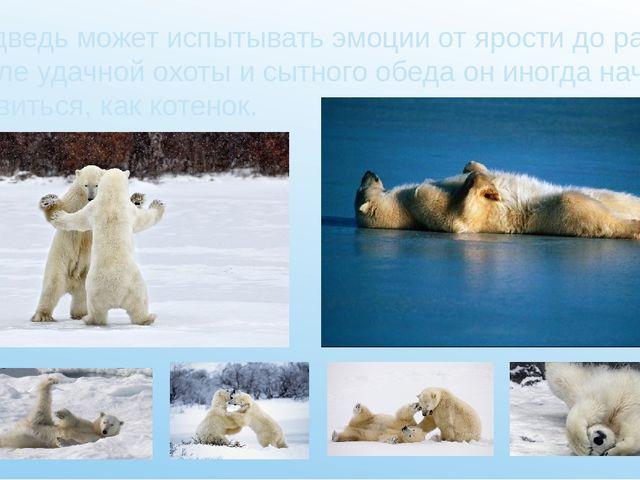 Медведь может испытывать эмоции от ярости до радости: после удачной охоты и с...