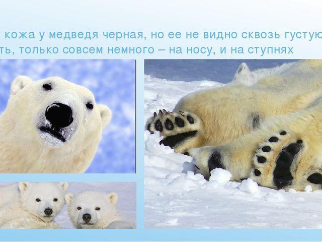 А вот кожа у медведя черная, но ее не видно сквозь густую шерсть, только сов...