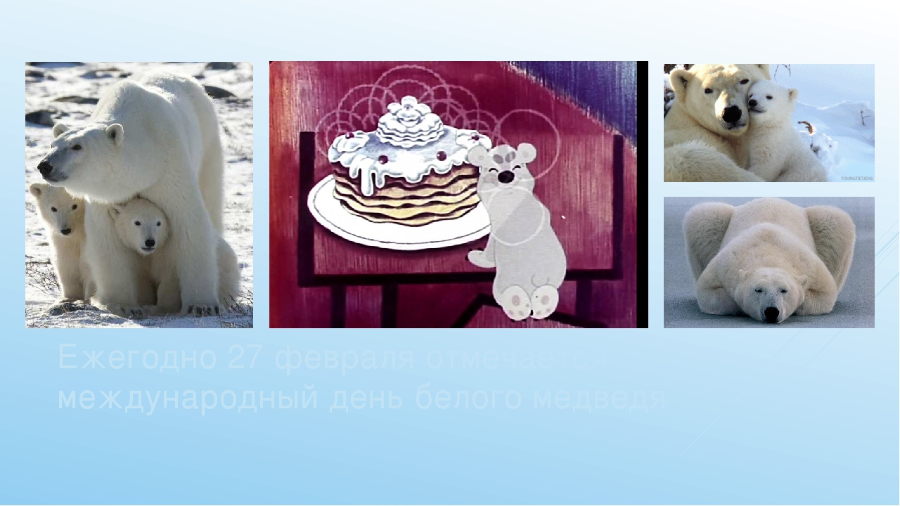 Ежегодно 27 февраля отмечается международный день белого медведя