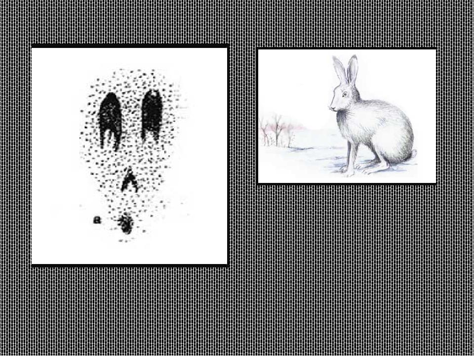 картинки со следами животных с названиями ребёнок мечтает