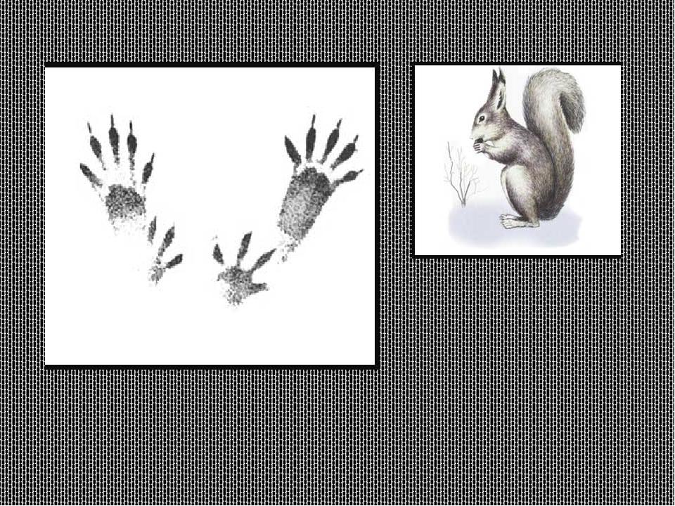 очень картинки со следами животных с названиями достаточно большой