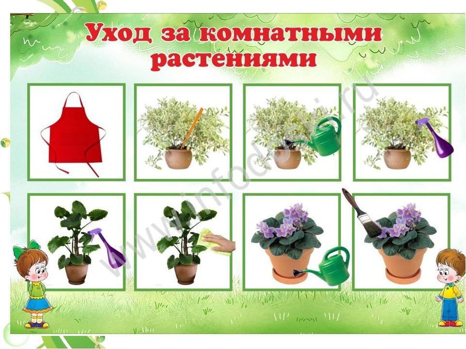 растения это понятие для детей наличие активной клиентской