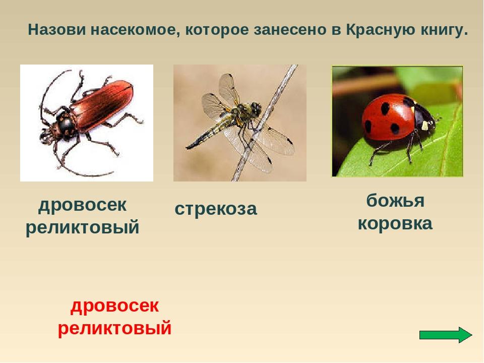 дерево, животные и насекомые из красной книги россии полевского адреса