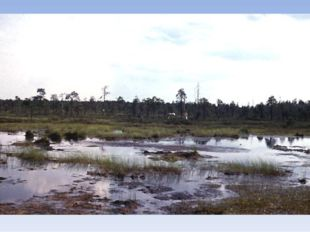 Верховые Низинные Формируются в условиях застаивания поверхностных вод на пло