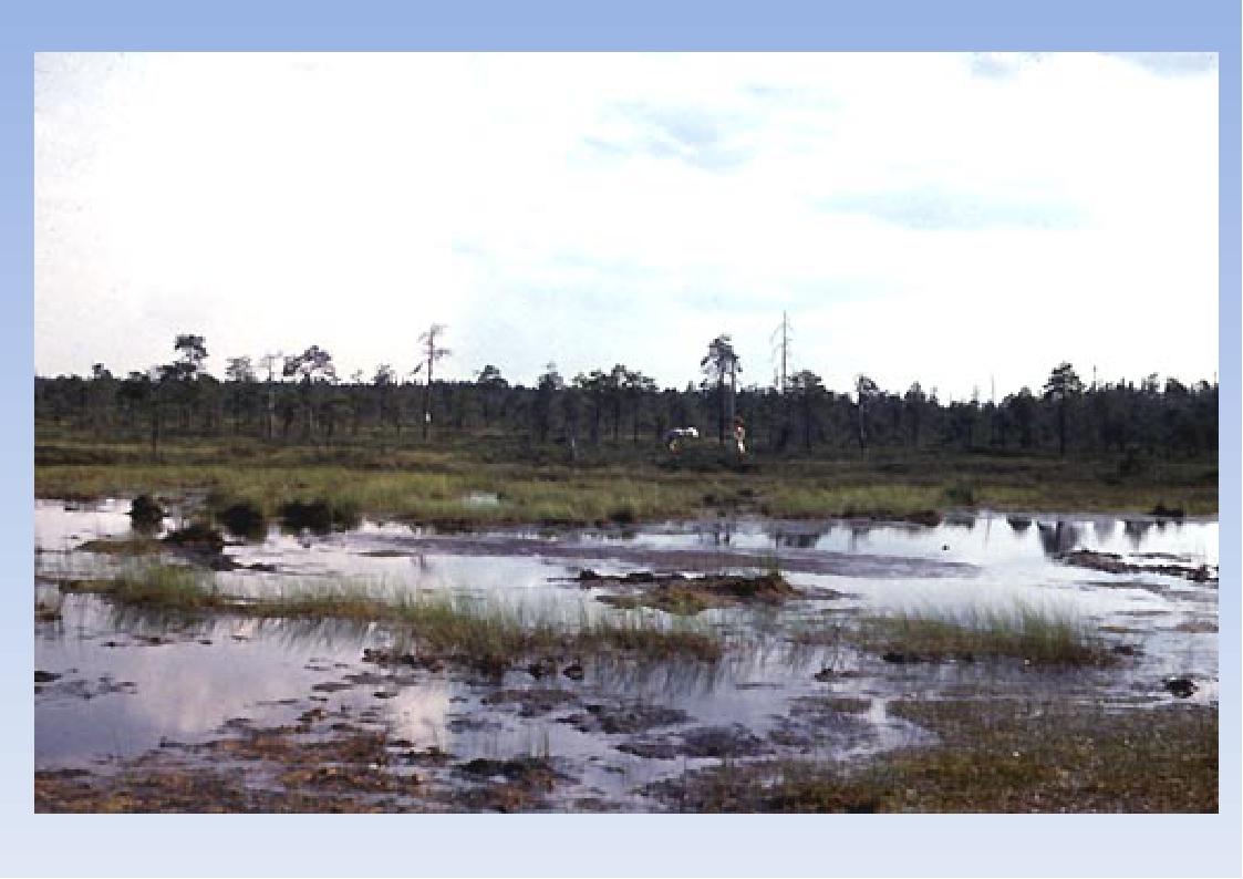 Верховые Низинные Формируются в условиях застаивания поверхностных вод на пло...