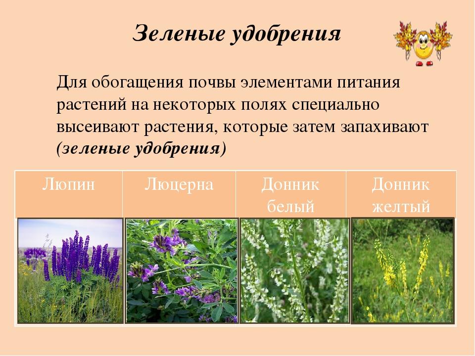 Зеленые удобрения Для обогащения почвы элементами питания растений на некотор...