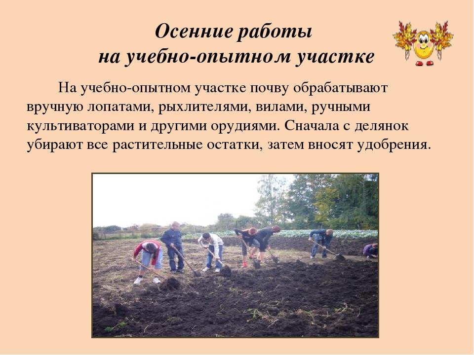 Осенние работы на учебно-опытном участке На учебно-опытном участке почву обра...