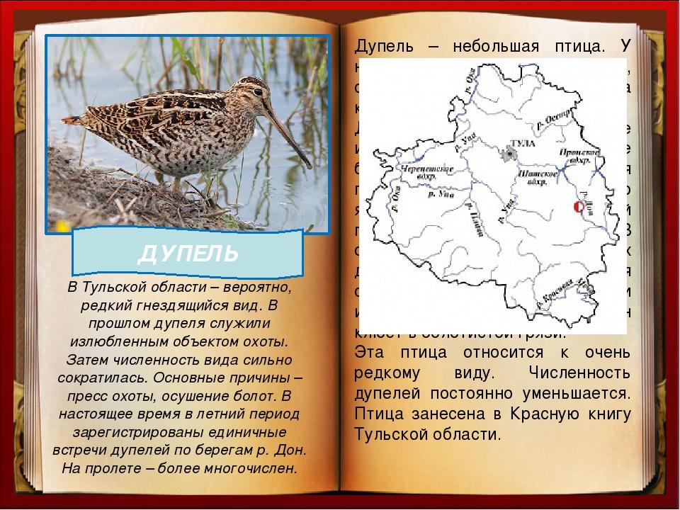 птицы нижегородской области занесенные в красную книгу времена