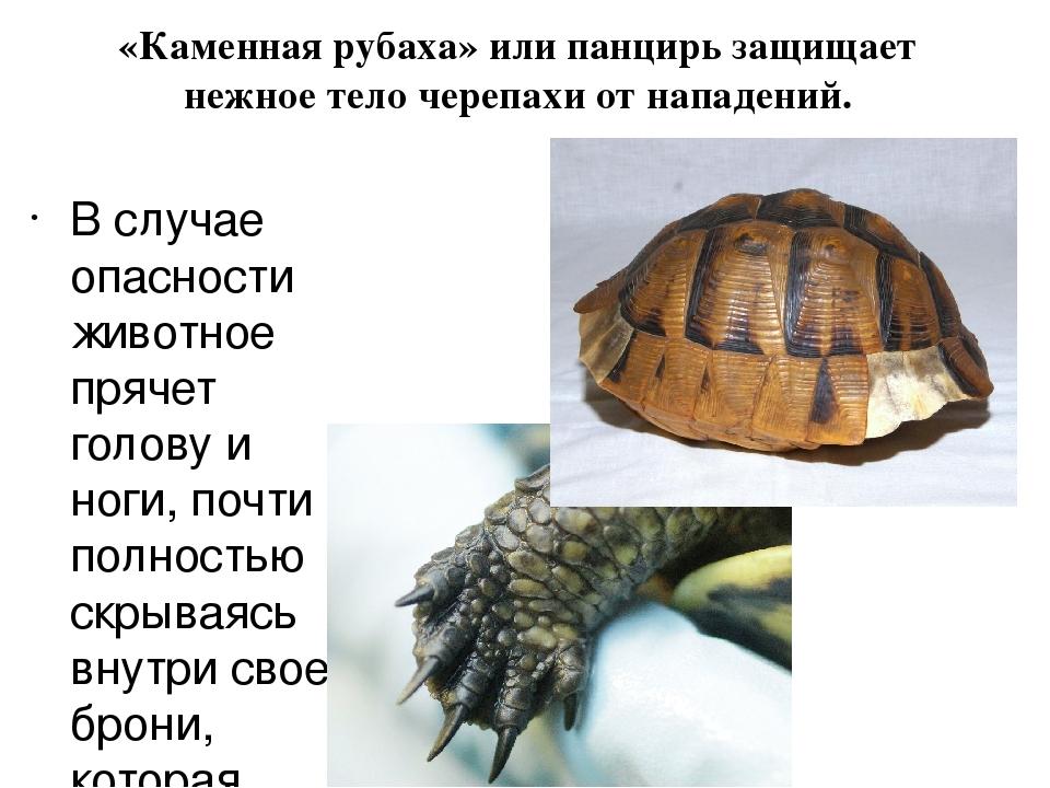 рассказ о черепах с картинками понедельника пятницу