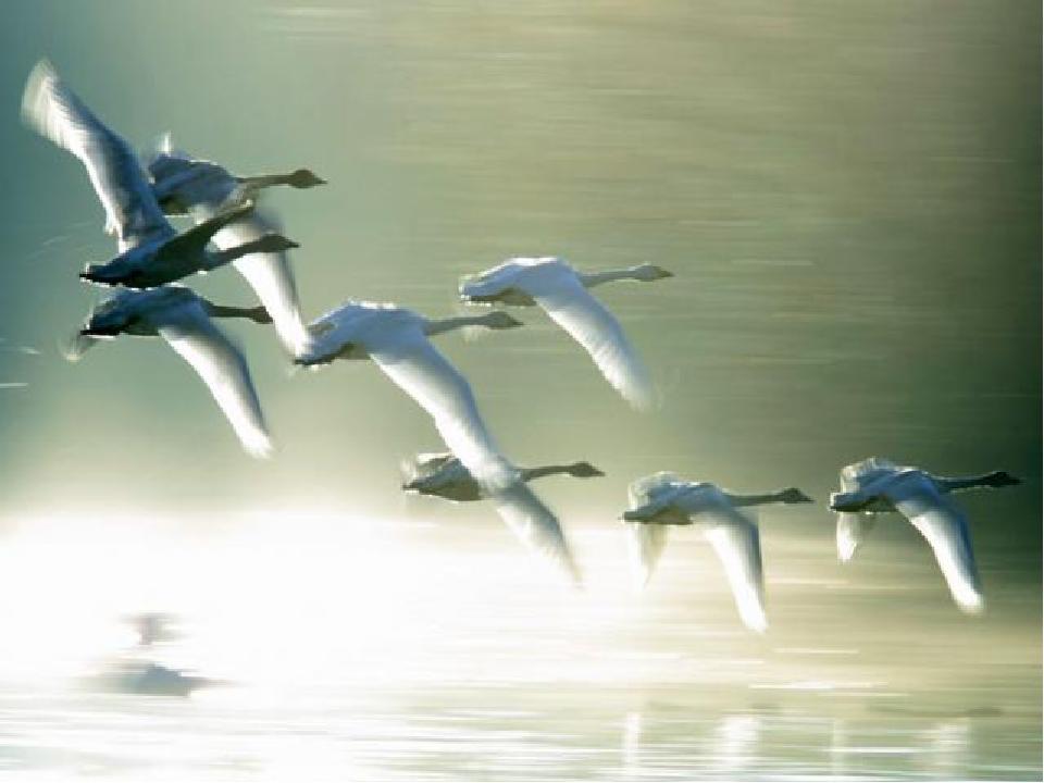 Полетели милый ты лети одна у меня сломано крылопро лебедей