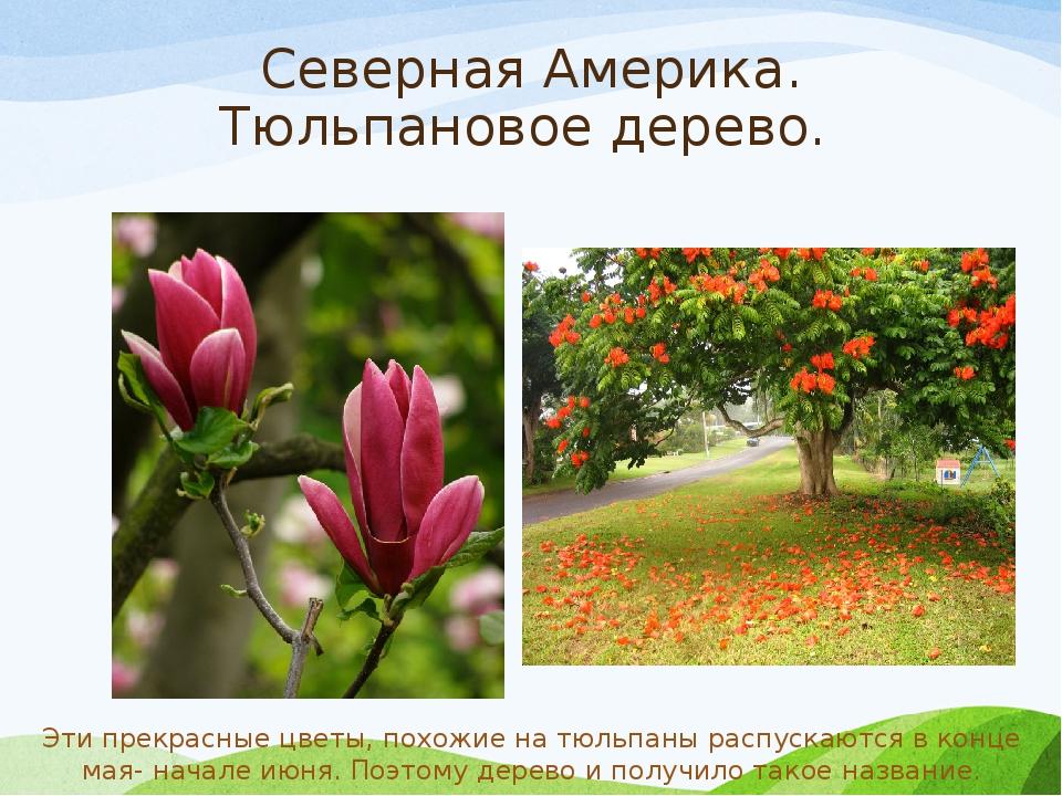 растения северной америки список с фото добро радость