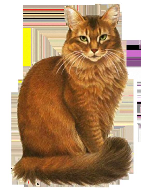 Картинки для доу кот
