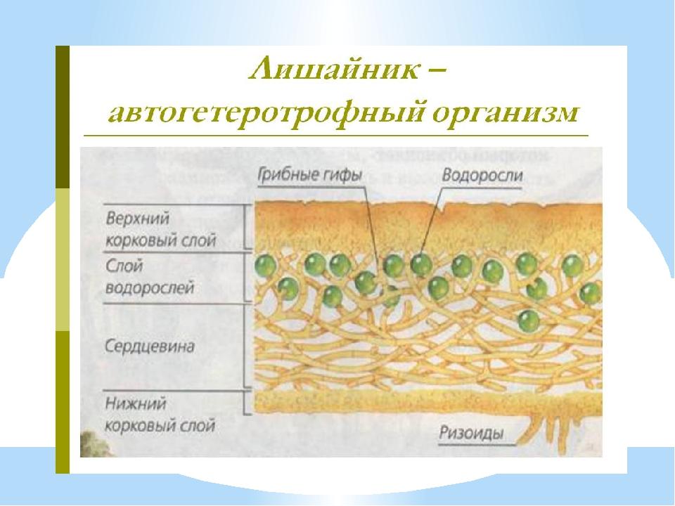 Сочинение на тему почему рассказ тургенева назван муму
