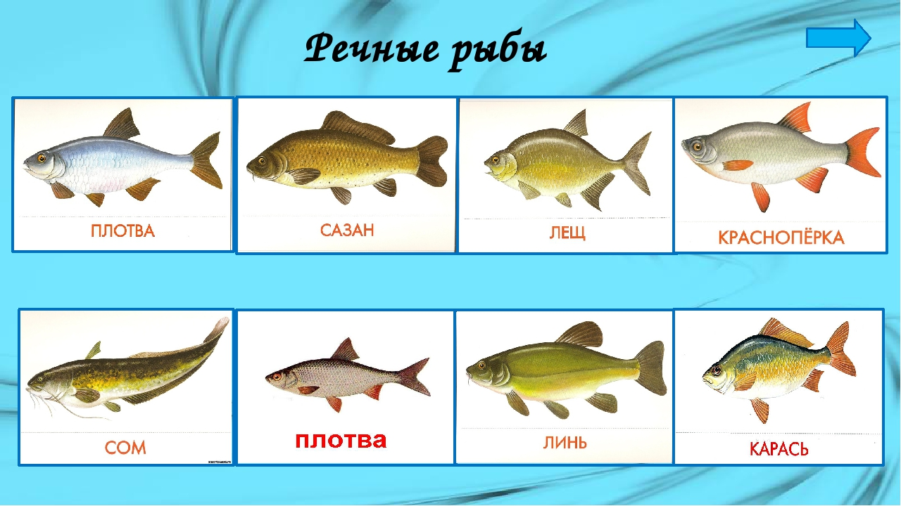 Показать картинки рыб спутники имеют