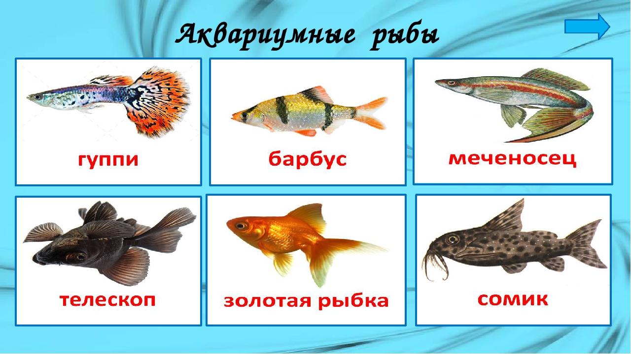 Названия аквариумных рыбок картинках