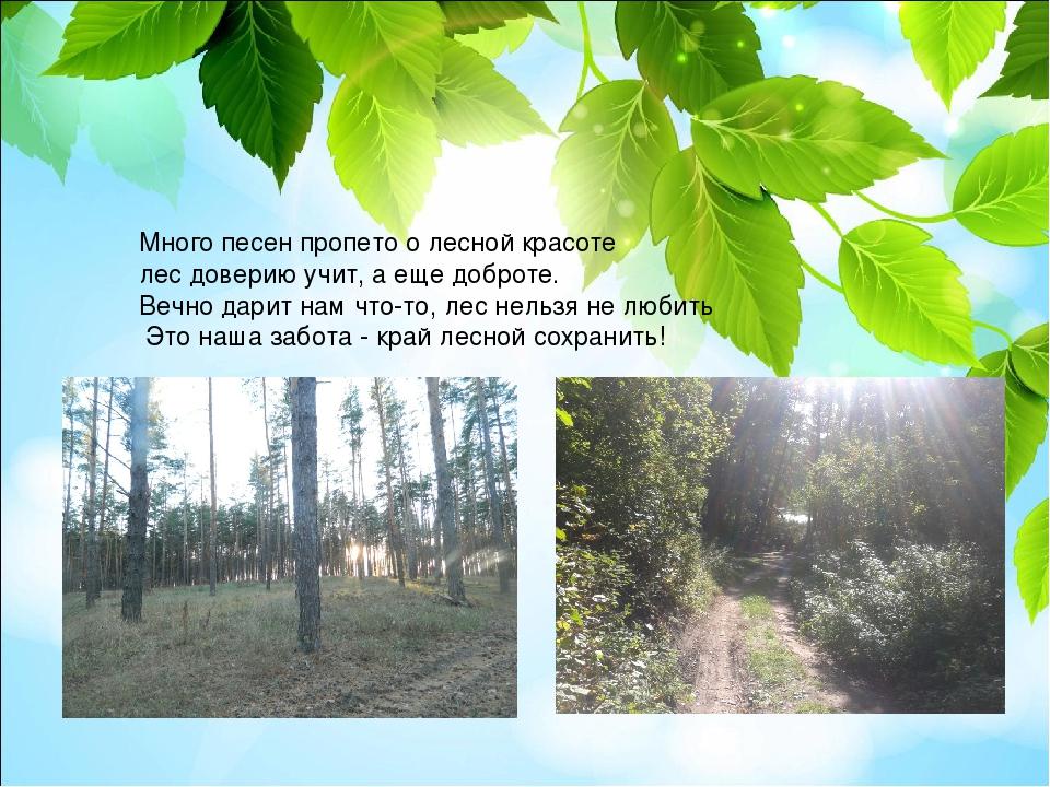 Много песен пропето о лесной красоте лес доверию учит, а еще доброте. Вечно д...