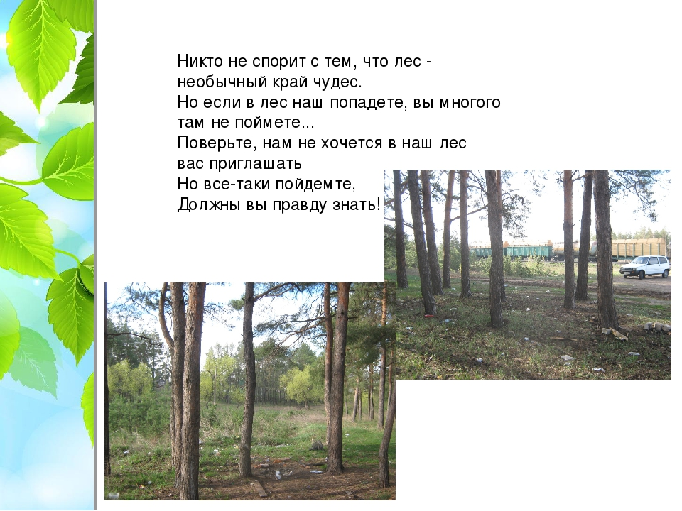 Никто не спорит с тем, что лес - необычный край чудес. Но если в лес наш попа...