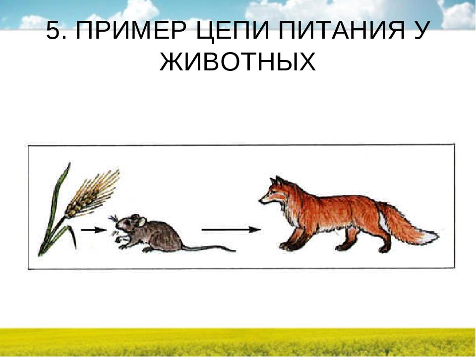 Цепочки питания животных в картинках
