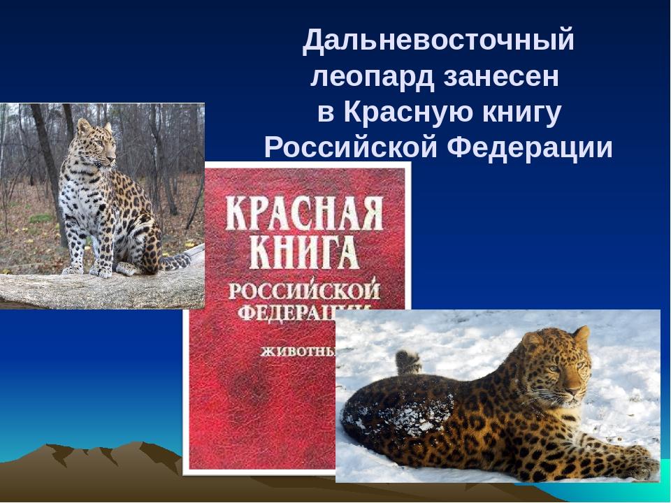 может, вины фото животных которые занесены в красную книгу дипломаты подчеркнули, что