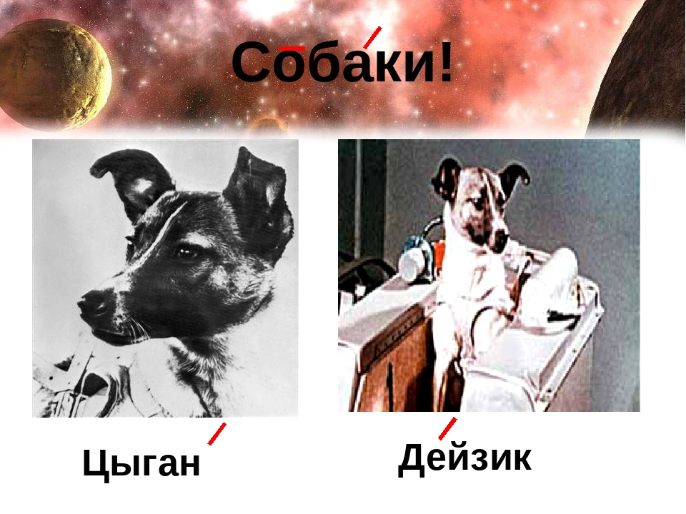 Собаки! Цыган Дейзик