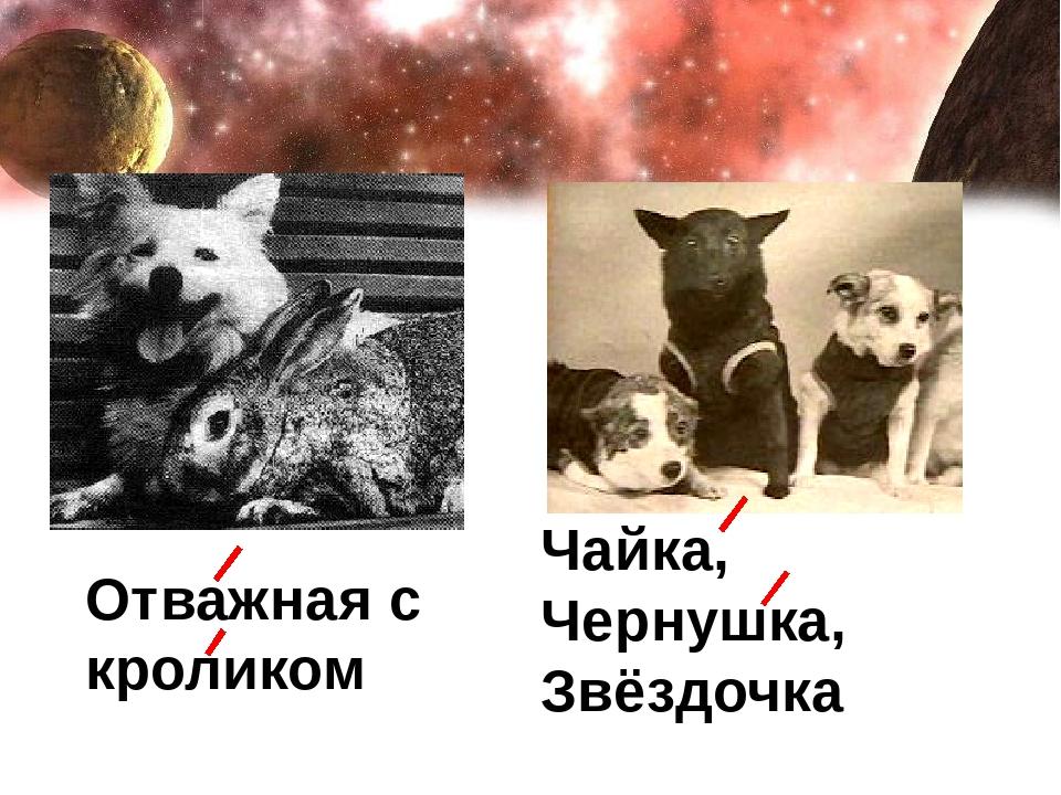 Чайка, Чернушка, Звёздочка Отважная с кроликом