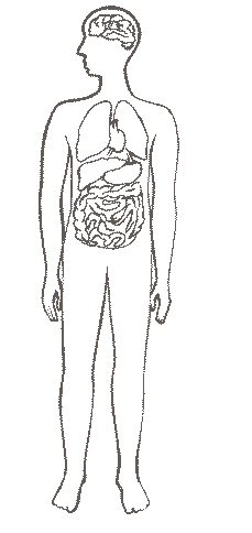 Картинки для раскрашивания организм человека