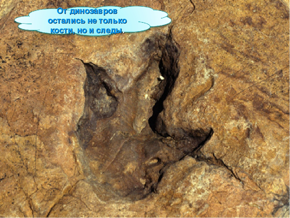 University Of Arizona Carbon Hookup Dinosaur Bones