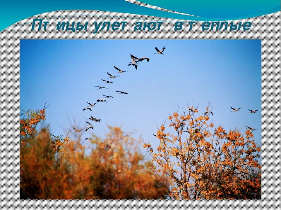 Птицы улетают в теплые края