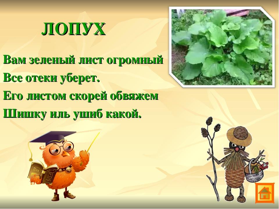 Армянском языке, зеленая аптека для детей в картинках