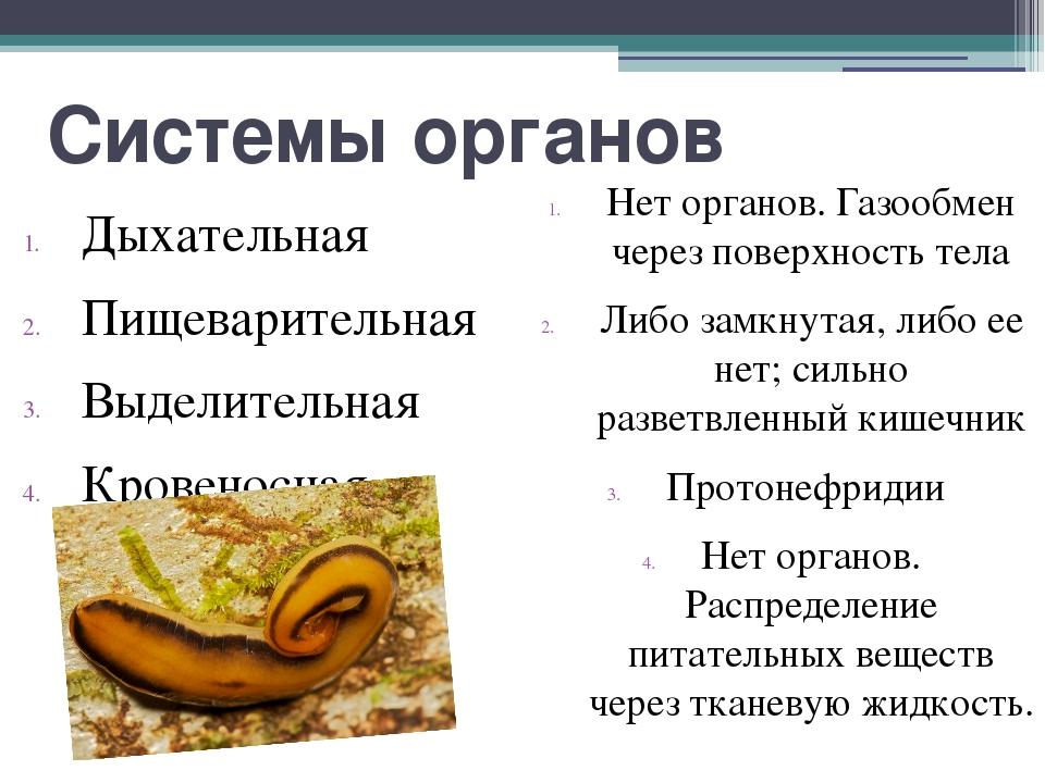 Системы органов Дыхательная Пищеварительная Выделительная Кровеносная Нет орг...