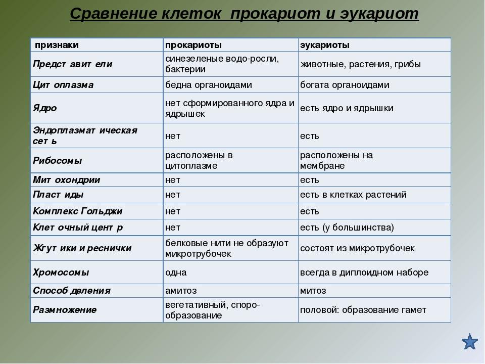 фотосинтез у прокариот и эукариот стен