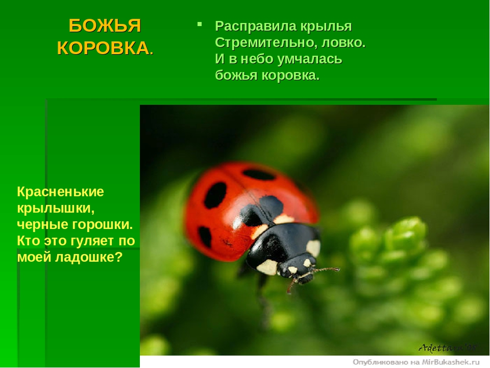 Стихи о насекомых для дошкольников