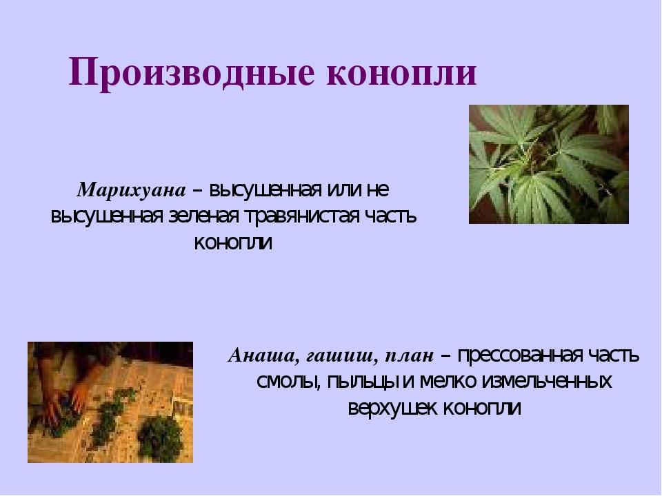 Польза или вред конопли медицинская марихуана сорт