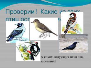 Проверим! Какие из этих птиц остаются зимовать? А каких зимующих птиц еще зап