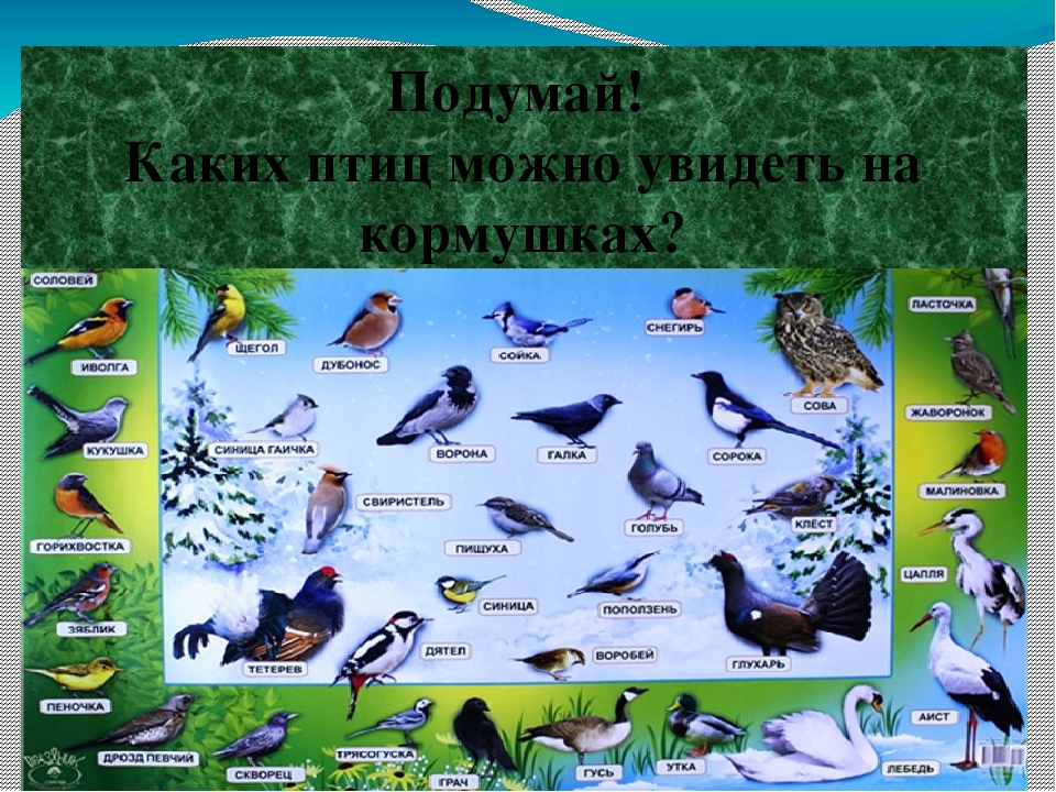 Подумай! Каких птиц можно увидеть на кормушках?