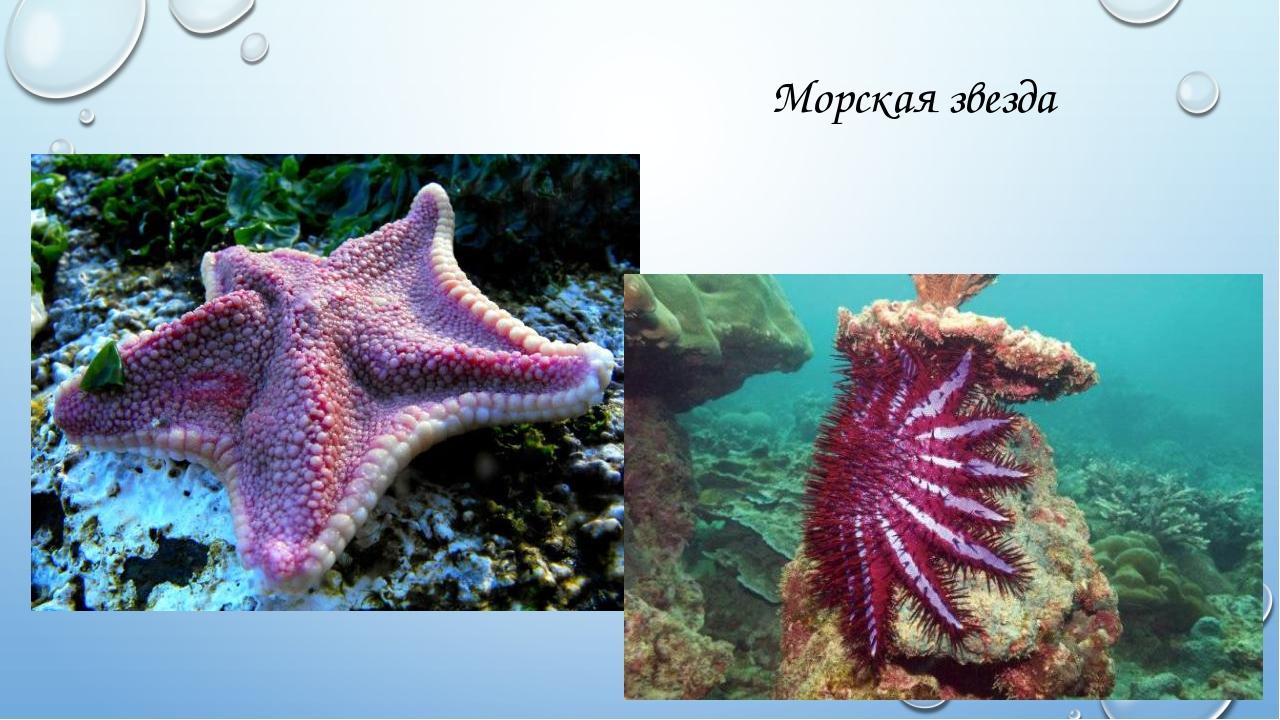 Морские обитатели фото с названиями и описанием