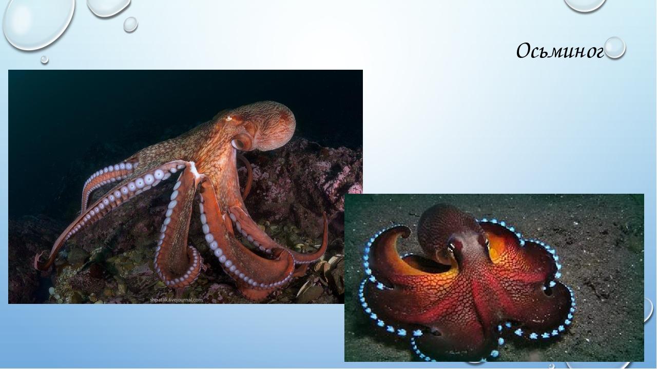 морские обитатели фото с названиями и описанием судьбой сыновей дочерей