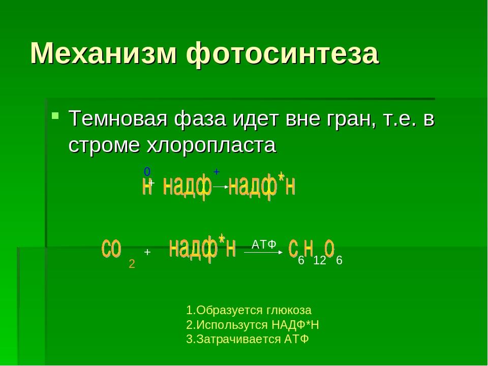 ноты фотосинтез механизм процесса турник подтянитесь, используя