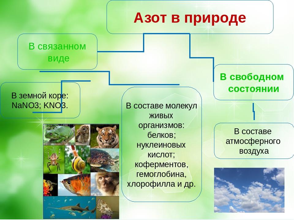 Где в природе содержится азот