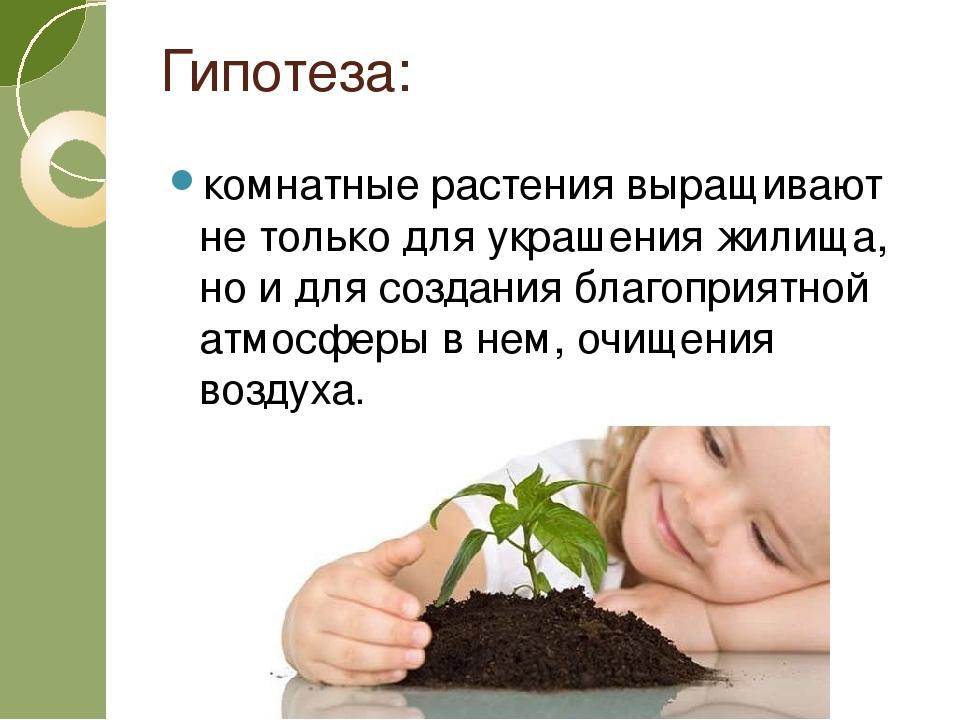 Гипотеза: комнатные растения выращивают не только для украшения жилища, но и...