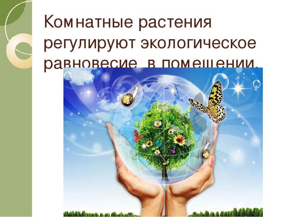 Комнатные растения регулируют экологическое равновесие в помещении.