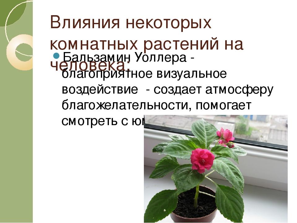 Влияния некоторых комнатных растений на человека: Бальзамин Уоллера - благопр...